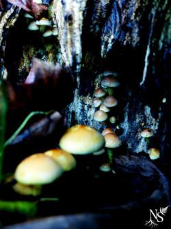 Mushrooms view I