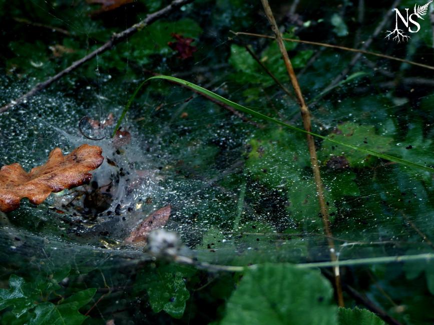Spider tunnel ❉ Tunnel d'araignée