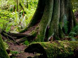 Squirrel glimpse ❉ Ecureuil entraperçu