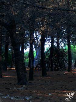 Treehouse ❉ Cabane