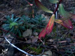 Autumn contrasts ❉ Contrastes d'automne