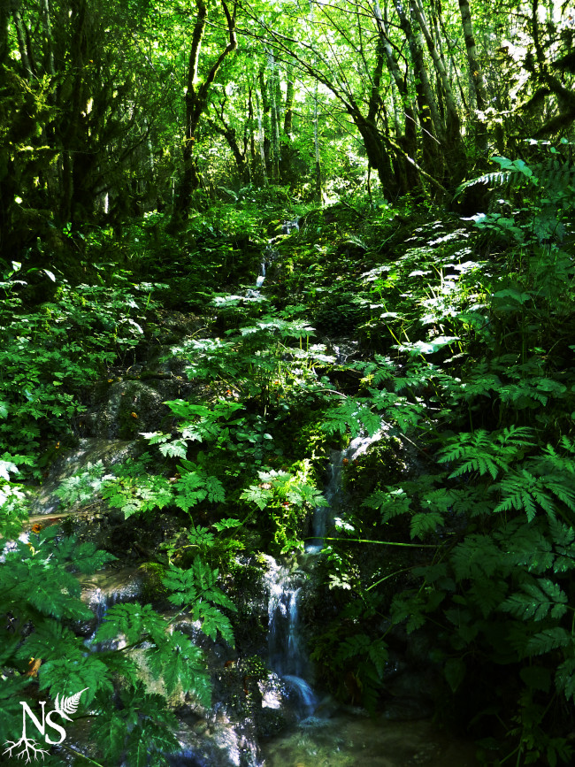 Lush forest waterfall ❉ Cascade en forêt luxuriante