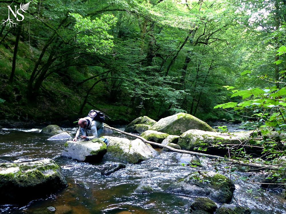 un homme ramasse des ailes de libellule sur un rocher dans la rivière