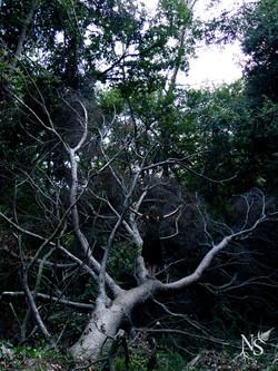 Forest witch ❉ Sorcière de la forêt