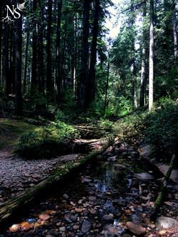 Rainforest ❉ Forêt pluviale