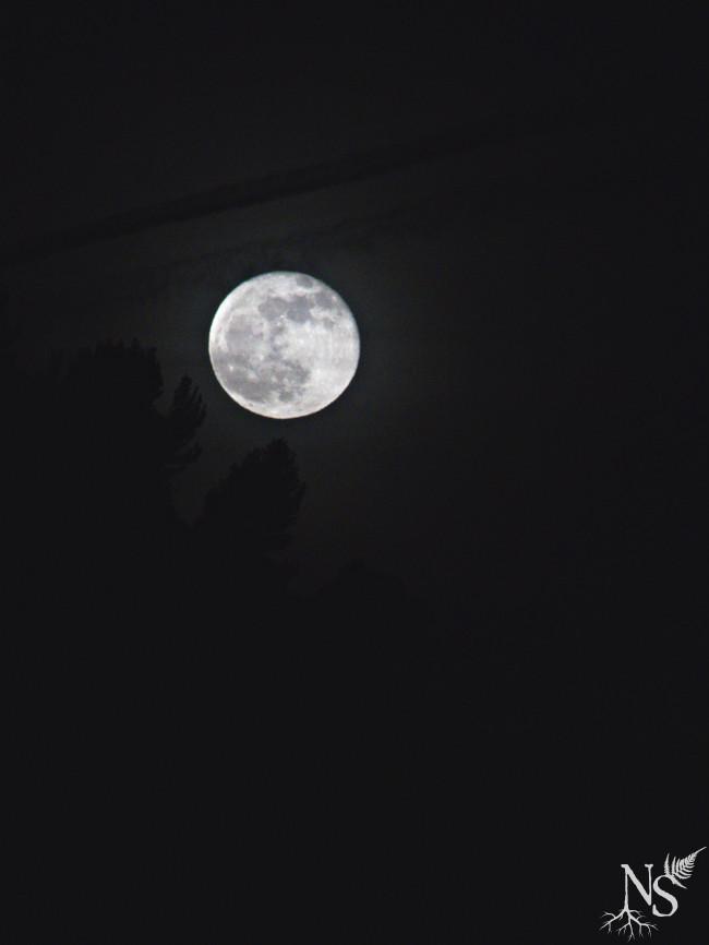 Full Moon ❉ Pleine Lune