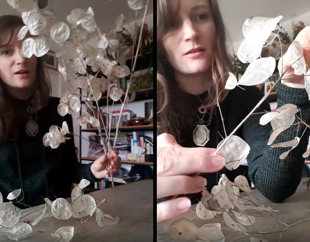 showing what the dried branch looks like and how to remove the membranes
