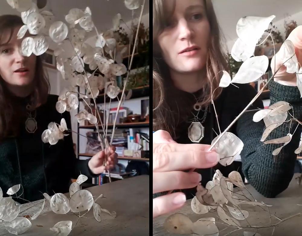 bouquet sec de lunaire et séparation des membranes