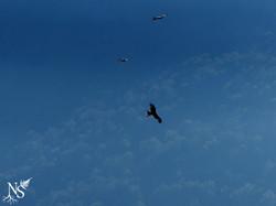 Kites flights