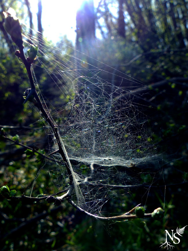 closeup on an intricate spiderweb