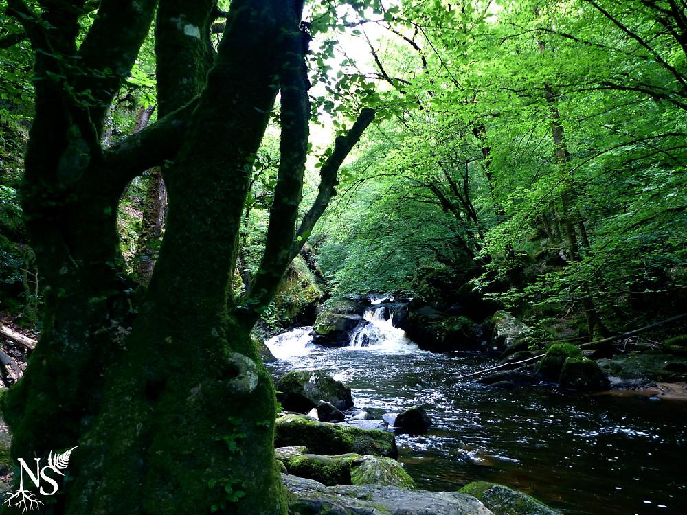 rivière et cascade dans la forêt