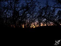 Winter sunset ❉ Coucher de soleil hivernal