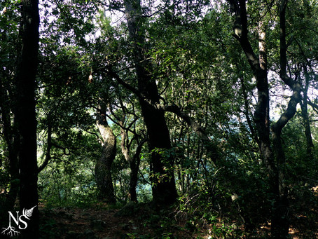 Forests: why they often remain unexplored