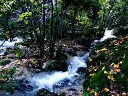 Forest waterfalls ❉ Cascades en forêt