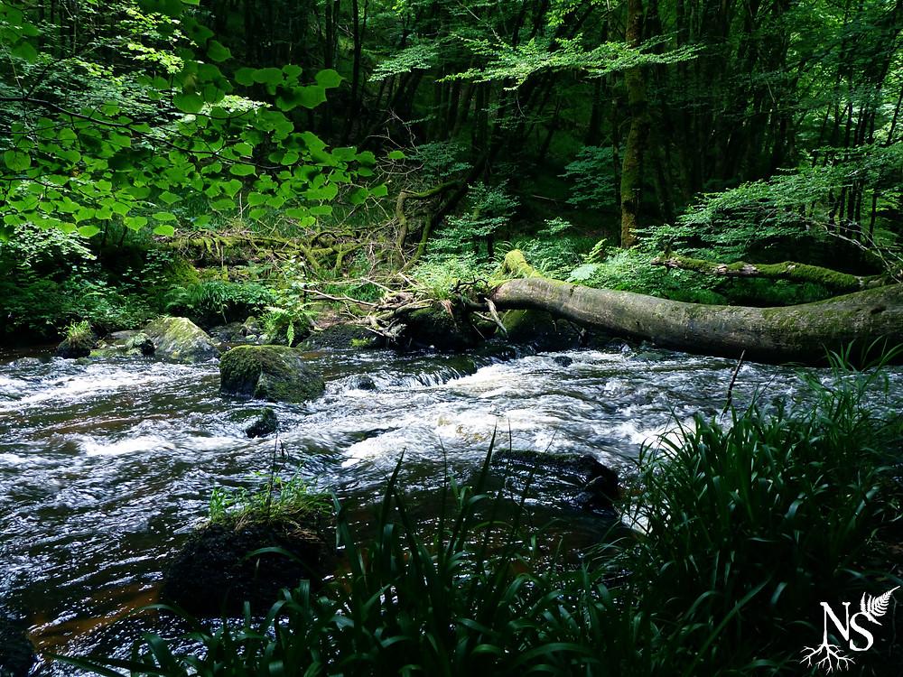 rivière dans la forêt luxuriante