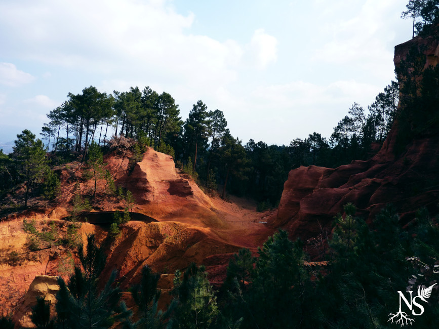 the ocher to red soil in Roussillon, Vaucluse (France) and pine forest