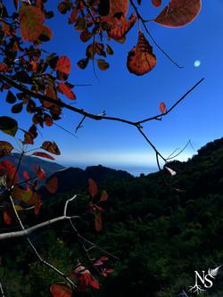 Autumn leaves above the sea ❉ Feuilles d'automne sur la mer