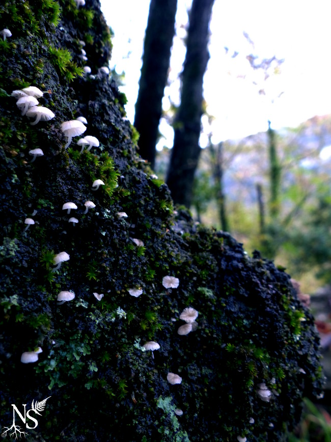Tiny mushrooms ❉ Champignons minuscules