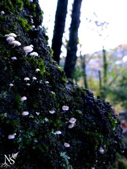 Tiny mushrooms ❉ Champignons minuscules