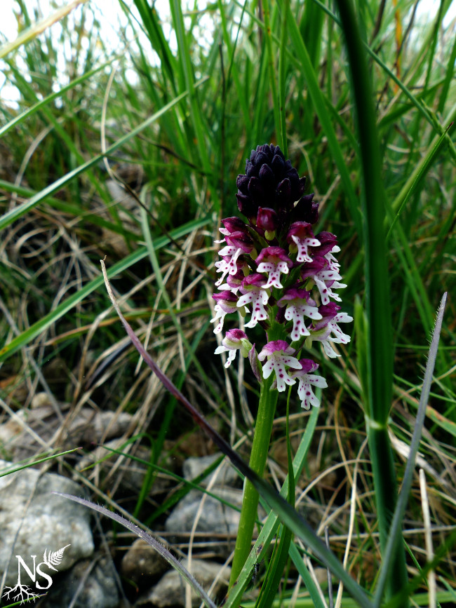 a flowery orchid in nature