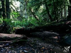 Lush rainforest ❉ Forêt pluviale luxuriante