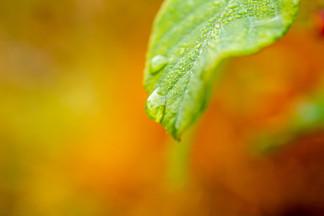 Macro and nature-October 06, 2018-6.jpg