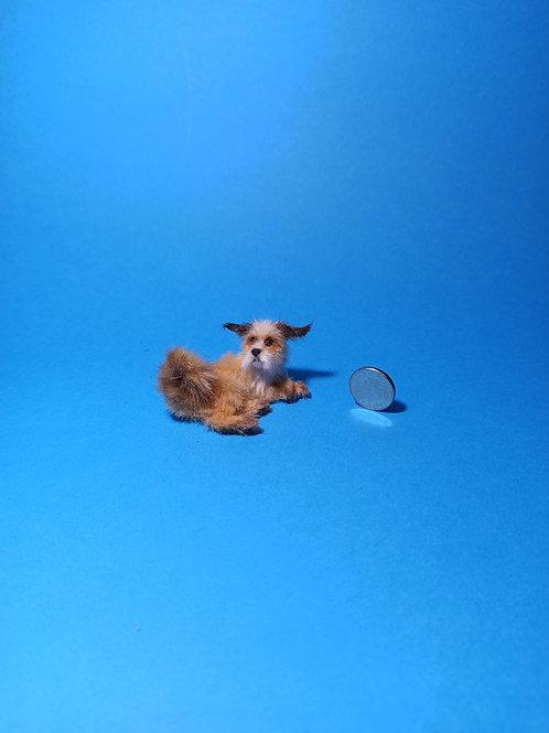 One of a kind miniature Shaggy Dog