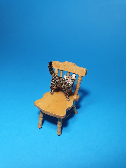 One of a kind miniature Bengal cat