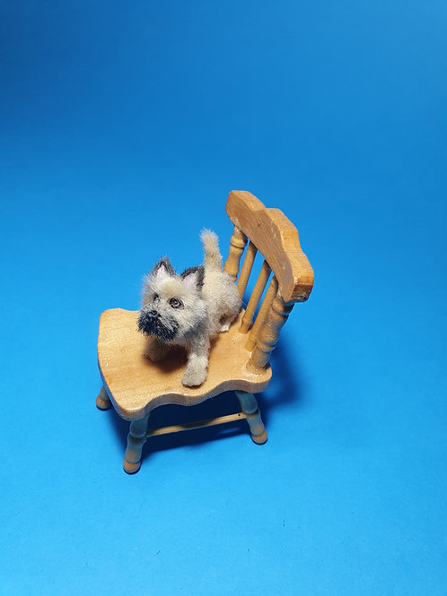 One of a kind miniature terrier dog
