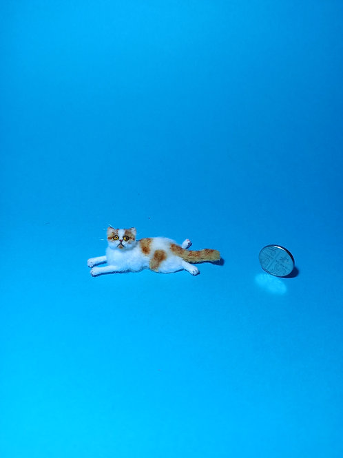 One of a kind miniature Persian Exotic cat