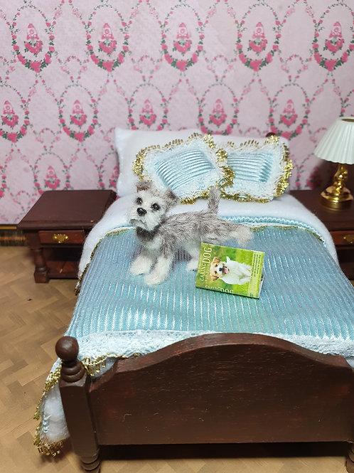 One of a kind miniature mini Schnauzer dog