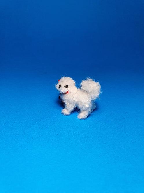 One of a kind miniature Maltese dog