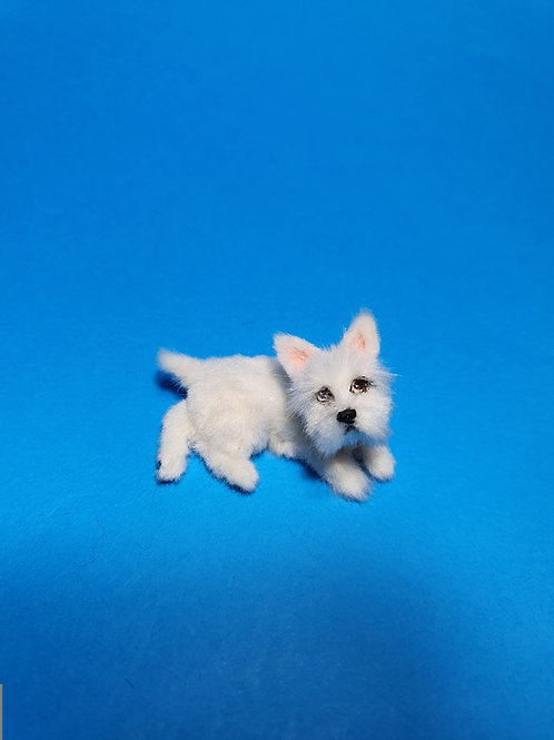 One of a kind miniature  West Highland White Terrier dog