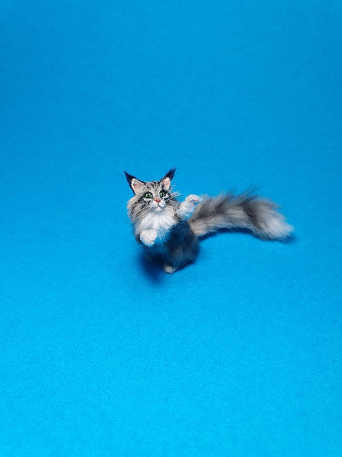 One of a kind miniature Maine coon cat