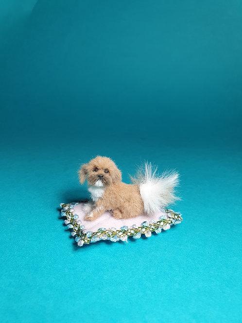 One of a kind miniature Shihtzu dog