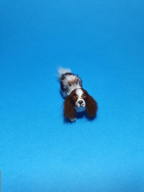 One of a kind miniature Springer Spaniel dog