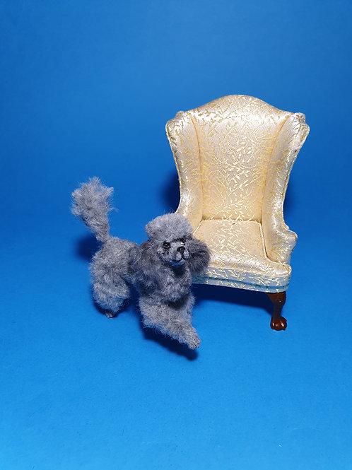One of a kind miniature Poodle dog
