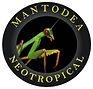 mantodea neotropical.jpg