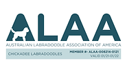 Chickadee ALAA LOGO 2021.png