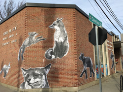 foxes_2