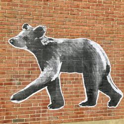 small_bear