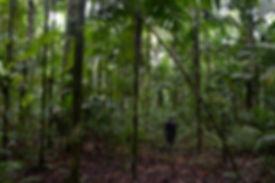 conservation area 6.jpg