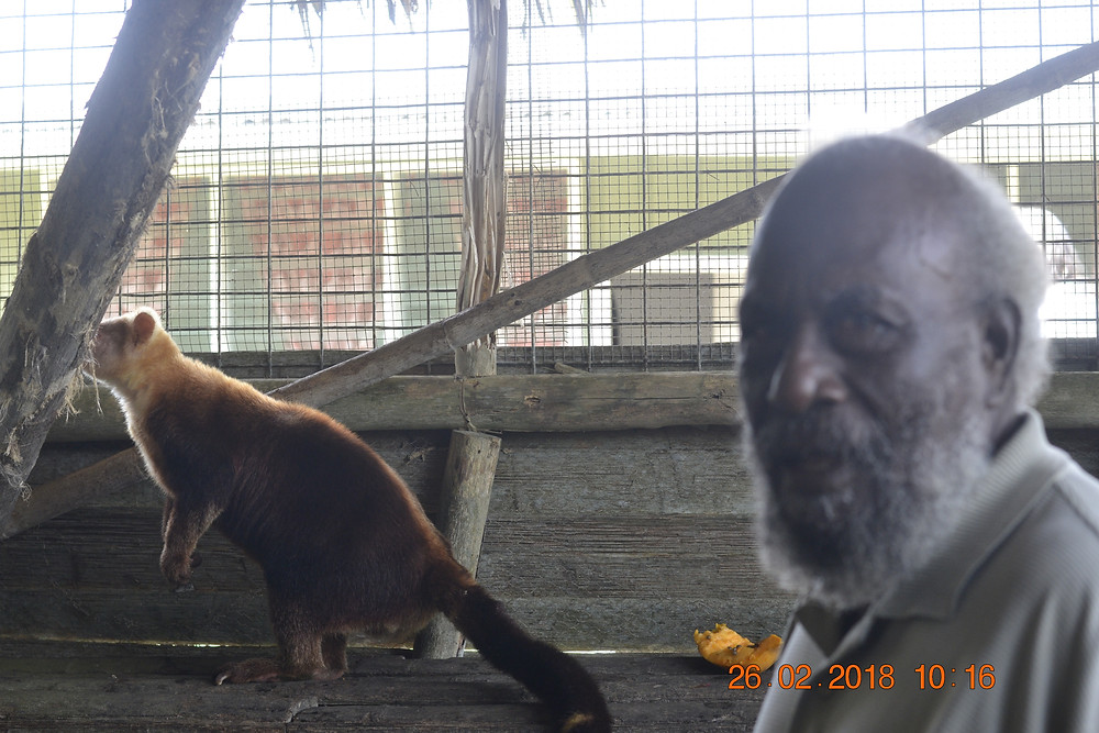 Retired educationist Chief John Masiu with one of the tree kangaroos. Mr Masiu's participation in the trip has been impactful in terms of building relationships between culturally diverse groups whose interest lies in preservation of nature