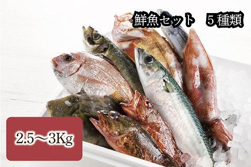 鮮魚セット 5種類(2.5kg〜3kg)