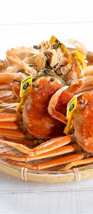 越前セイコ蟹