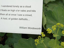 Plaque from Children's literary garden of William Wordsworth quote.  Yellow flowers in foreground.