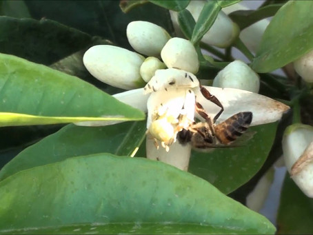 Hives added in Fort Pierce