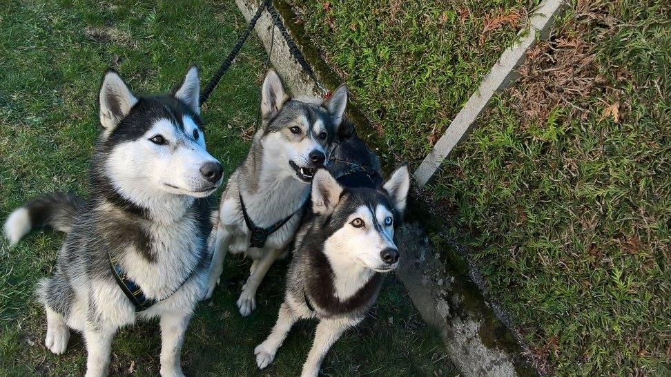 Maho, Aria et Yuna