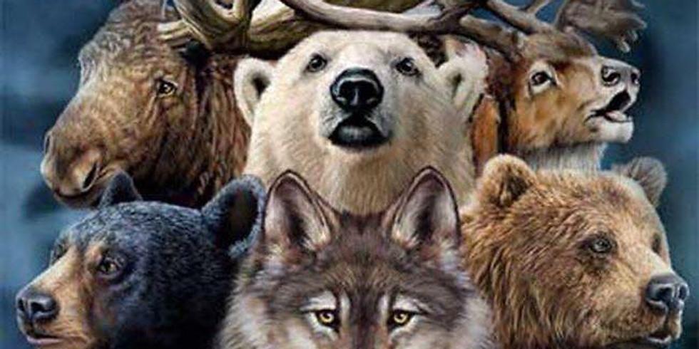 Animal Totems & Animal Medicine