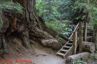 Pacific Northwest, Stairway